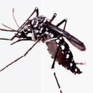 Entenda o que e o Zika Virus